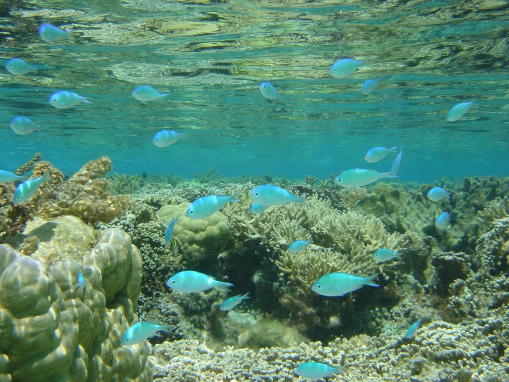 Alquiler Barcos Polinesia
