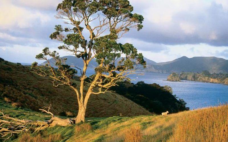 Alquiler-barcos-Nueva-Zelanda-Opua-velero-catamaran-navegar-vacaciones
