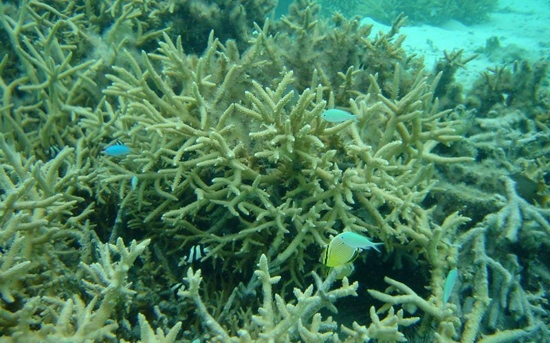 polinesia-corales_8295559406_o