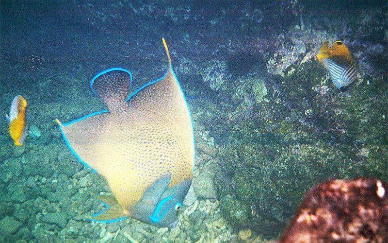 seychelles-peces_8291865378_o