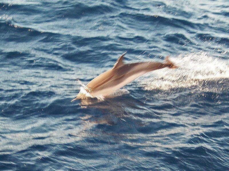 vacaciones-en-barco-crucero-a-ibiza-y-formentera_28019363310_o