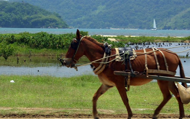 Alquiler-barcos-Brasil-vacaciones-crucero-navegar-velero-catamaran