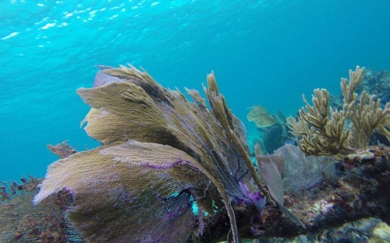 arrecifes_25549787814_o