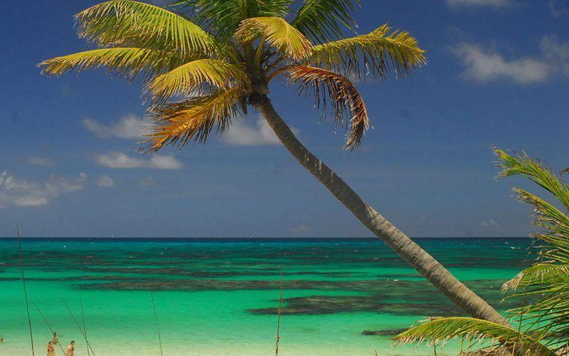 bahamas-palmera_8318869901_o
