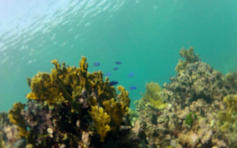 belize-arrecife-coral_8320165186_o