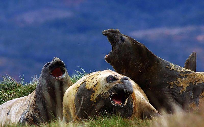 leones-marinos-patagonia_8507053562_o