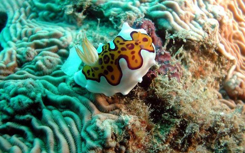 madagascar-corales_8291337930_o