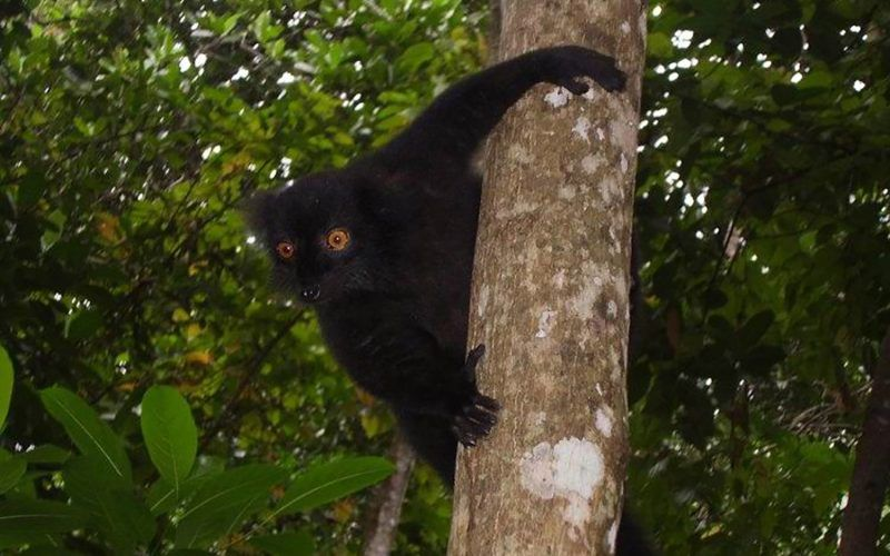 madagascar-lemure_8291337356_o