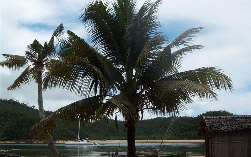 madagascar-palmeras_8290278721_o