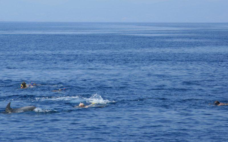 milina-delfines_8255954178_o