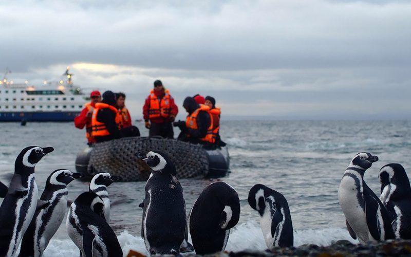 pinguinos-antartida_8507053204_o