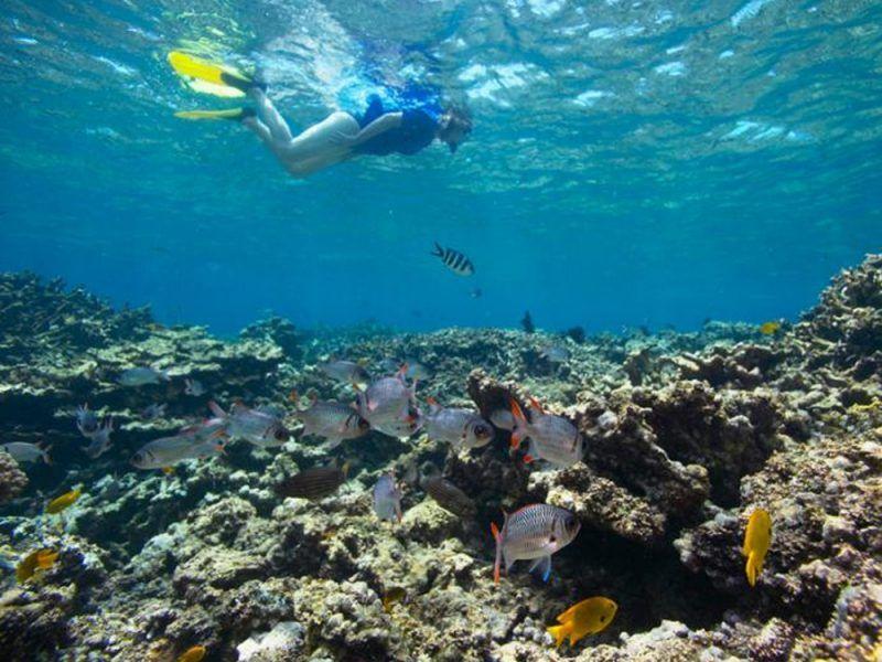 seychelles-buceo_8486616130_o