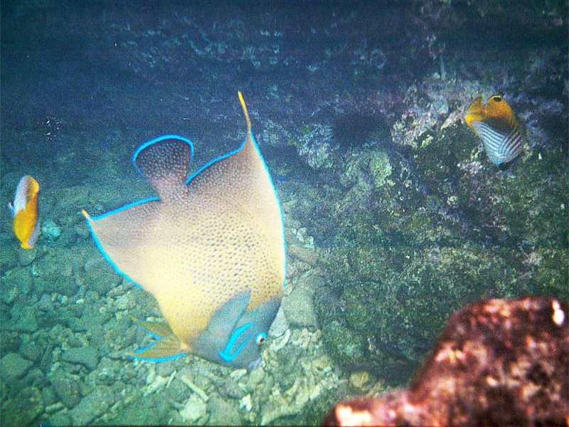 seychelles-peces_8486615300_o