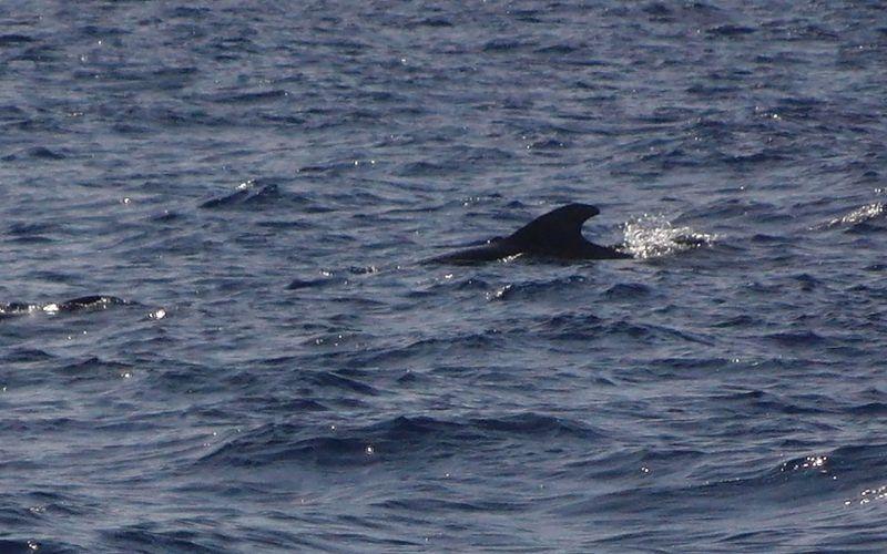 Alquiler-Barcos-veleros-vacaciones-Canarias-Gran Canaria