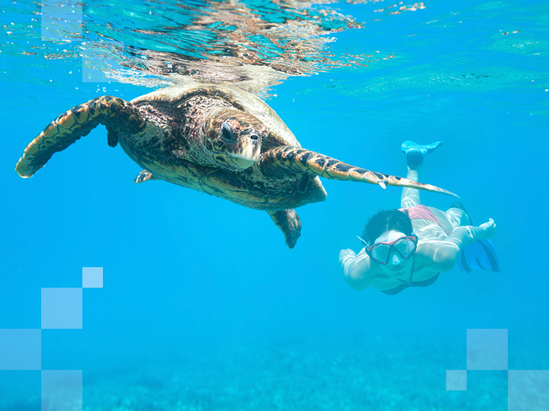 12-reasons-to-visit-Sri-Lanka-sea-turtles-800x600