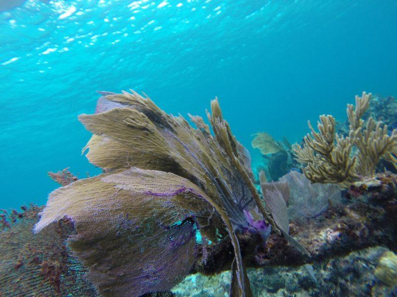 Alquiler -Cuba-vacaciones-navegar-Caribe