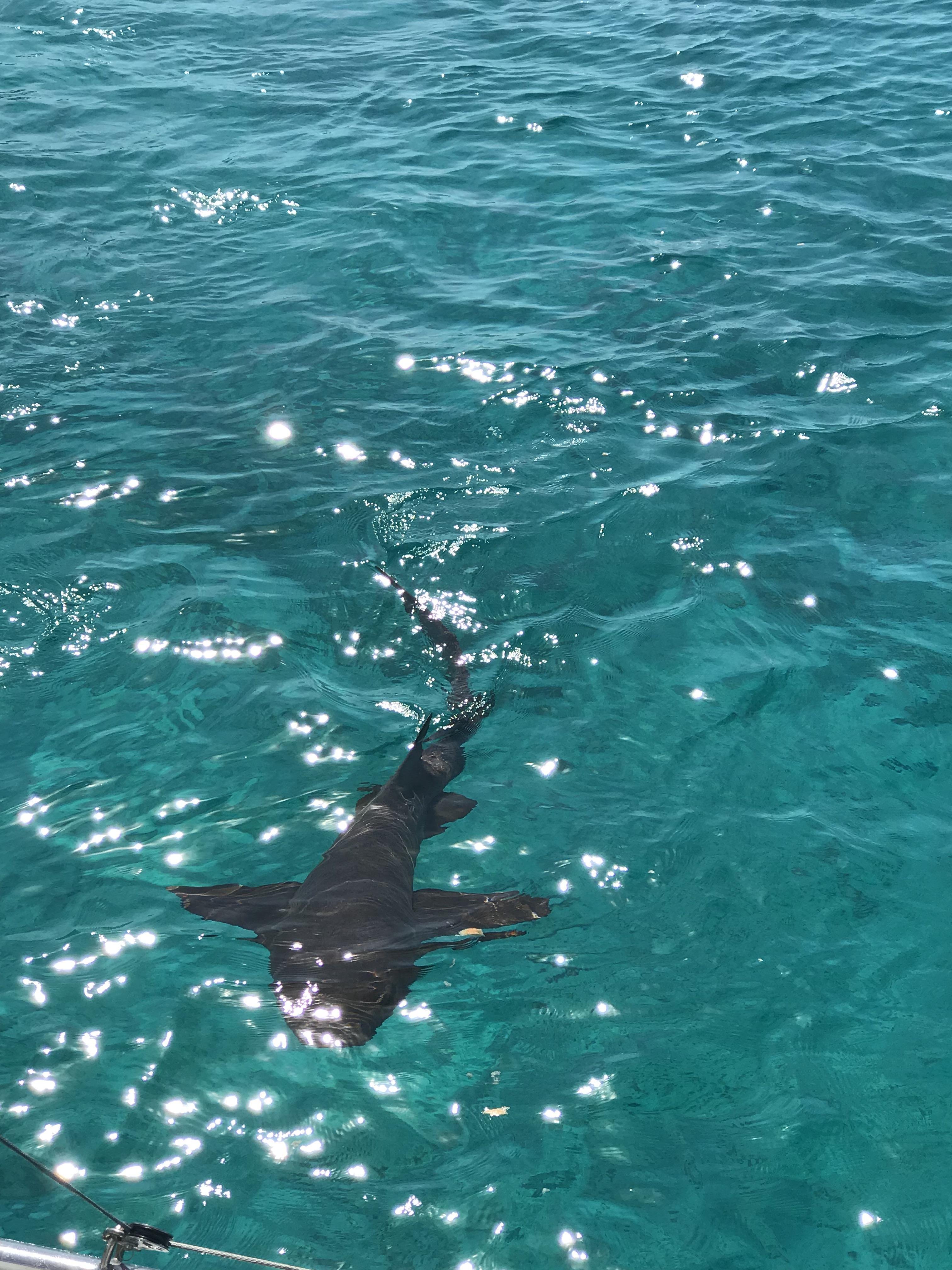 Alquiler-barco-Caribe-yate-motor-velero-catamaran-turismo-vacaciones-Bahamas-tiburon